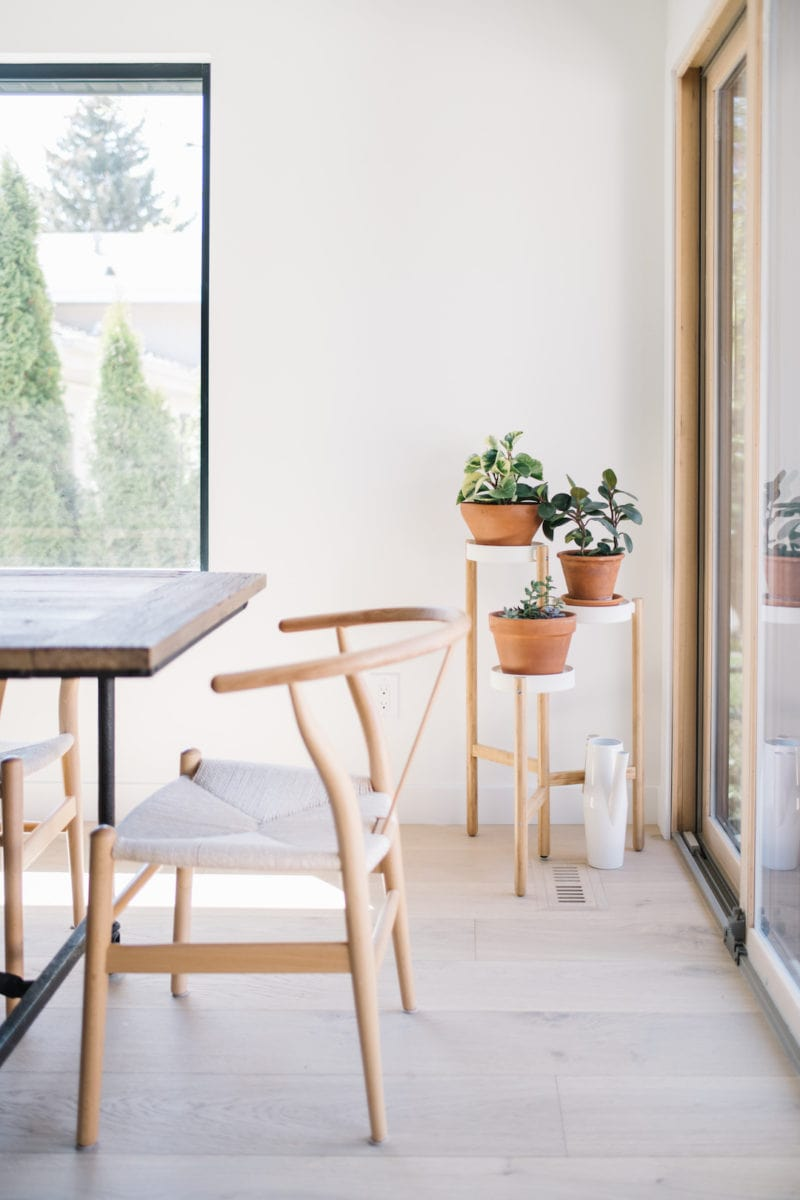 plants by a window with wishbone chair